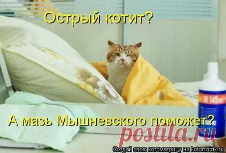 котит