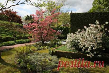 Цветущие кустарники как неотъемлемый элемент ландшафтного дизайна | Ландшафтная Мастерская | Яндекс Дзен