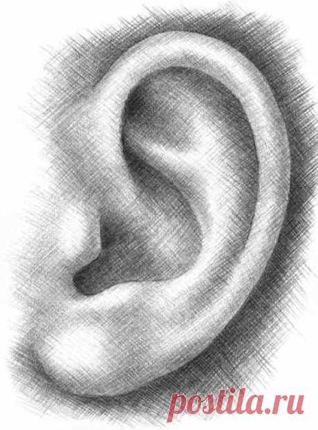 Рисуем ухо