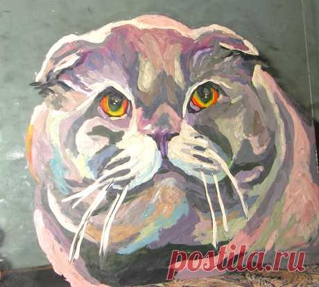 Кот из приюта Феликс