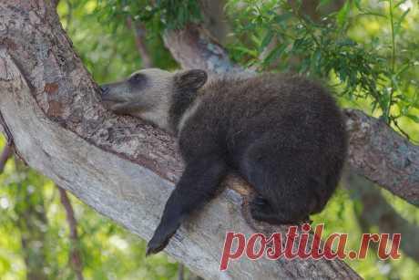 Новые фотографии медвежата.