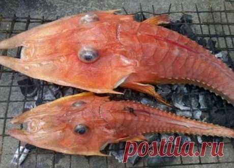 Странное существо было найдено у берегов Австралии Рыбаки из Австралии сильно испугались, обнаружив непонятную рыбу. У этой «рыбы» есть лапы и панцирь.  Рыба-креветка была поймана возле морской границы Дарвина с Индонезией на 30-метровой глубине. Морс…