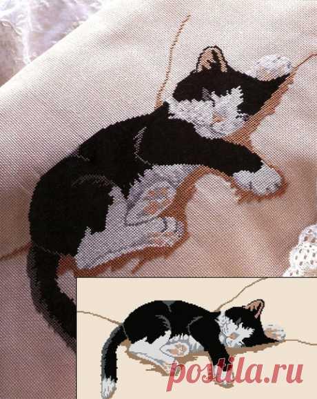 #животные_ТриНити #кот_ТриНити