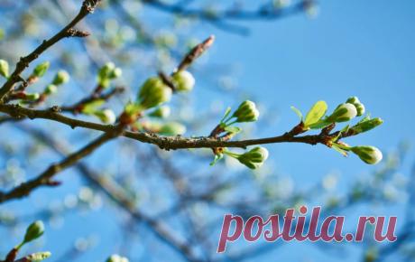 ТРЕТЬЯ обработка сада от вредителей (до цветения)   ЗАЩИТА от ВРЕДИТЕЛЕЙ   Яндекс Дзен