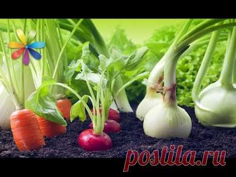 Хотите всю зиму есть свежие овощи, но покупать очень дорого? Вырастите их на подоконнике по уникальным советам Аллы Ковальчук. Известный кулинар расскажет, к...