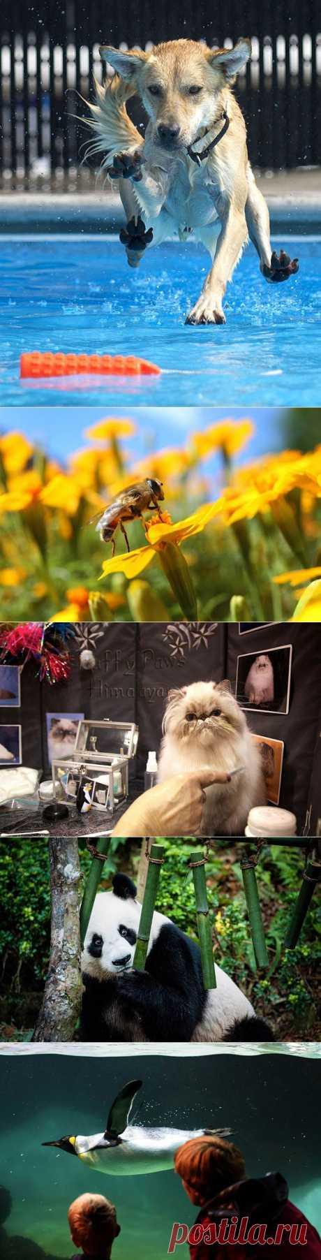 Животные в фотографиях | Fresher - Лучшее из Рунета за день