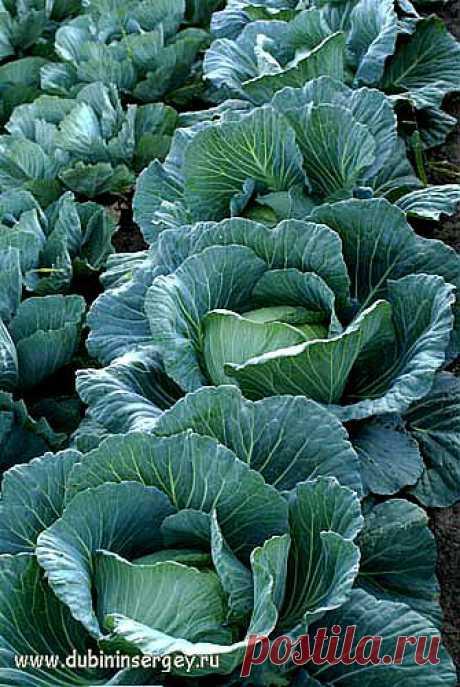 Удобрение из… сорняков: как приготовить жидкую подкормку.