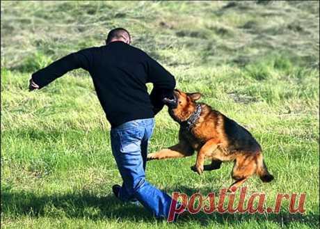 Как вести себя при нападении собаки К собакам у людей двойственное отношение. Одни жизни не представляют без чертверолапых защитников, а другие – боятся атаки со стороны пусть и прирученного, но хищника. В этом обзоре – руководство к...