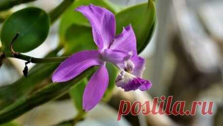 Как «заставить» цвести орхидею: 6 советов, которые помогут Рассказываем, почему орхидея не цветет в домашних условиях и что нужно сделать, чтобы это исправить. Из магазина довольные покупатели уносят усыпанное цветами растение. Потом в течение нескольких недель любуются на обильное цветение. После наступает период покоя, и цветоводы с нетерпением ждут его окончания. Но ожидание иногда затягивается на месяцы. Разберемся, почему не цветет орхидея и что предпринять, чтобы ее ...