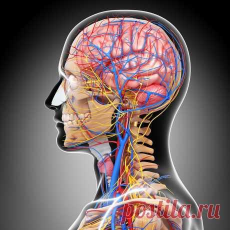 Как навсегда избавится от гипертонии? Упражнения доктора Шишонина | Всегда в форме!