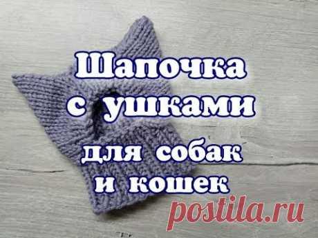 Шапочка с ушками для собак и кошек, DIY Hat for dogs and cats