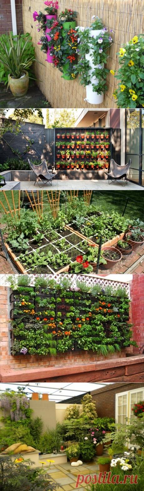 Контейнерные сады для маленького участка | САД | Яндекс Дзен