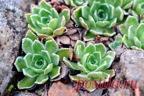 Наиболее популярные домашние нецветущие растения