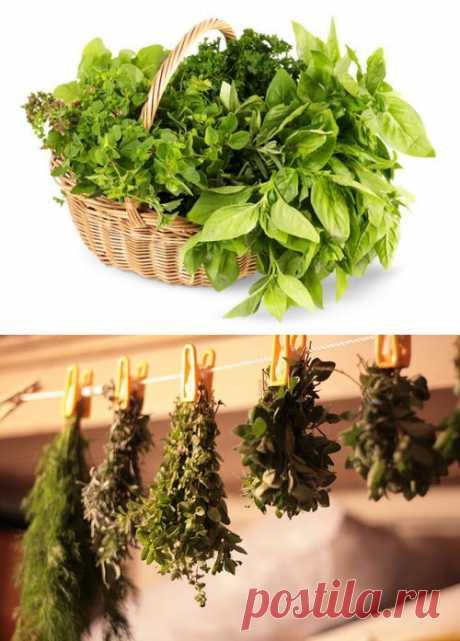 Как заготавливать свежую зелень на зиму