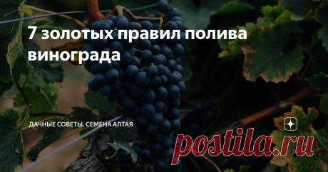 7 золотых правил полива винограда Виноград – культура, которая требует Вашего внимания в течение всего лета. Залог крупных, спелых, сочных гроздей винограда, в частности, зависит от полива.
