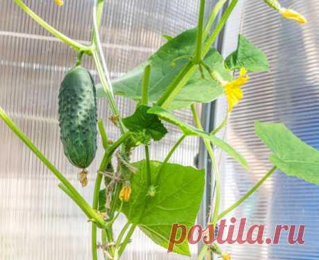 Домашний огород: 6 овощей, которые вы можете вырастить на подоконнике