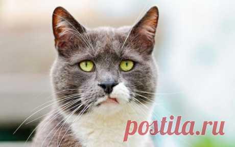 9 интересных фактов о кошачьем уме, характере и повадках