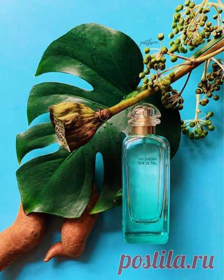 Нежные духи для офиса: 9 красивых ароматов, которые не будут раздражать вас и ваше окружение | Аромат твоего тела | Яндекс Дзен