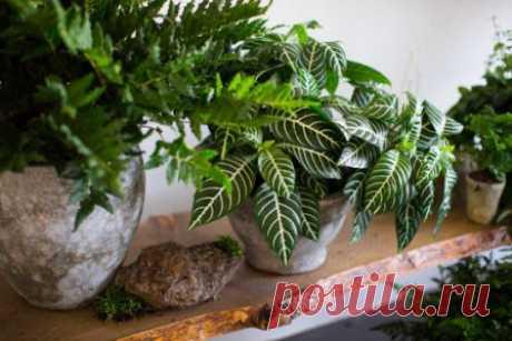 Приметы на домашние цветы, о чем предупреждают комнатные растения Народные приметы на цветы в доме, если комнатный цветок завял или расцвел, о чем это говорит. Приметы на деньги, на отношения, на беду и счастье по домашним цветам.