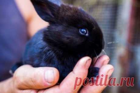 Воспаление суставов пальцев рук: причины, симптомы, лечение народными средствами в домашних условиях - Onwomen.ru