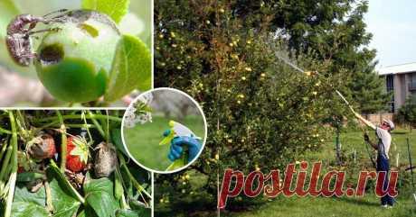 Чем обработать сад от болезней и вредителей весной и летом Календарь ухода за плодовыми деревьями и ягодными кустарниками на весну и лето.