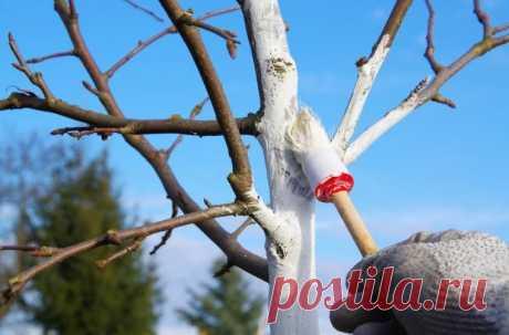 Как позаботиться о деревьях во дворе и на даче: рецепт идеальной побелки