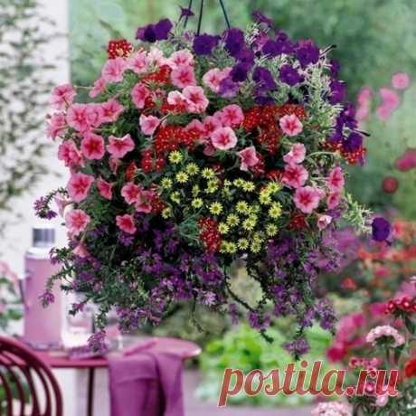 Ампельные цветы для кашпо, фото и названия. Композиции