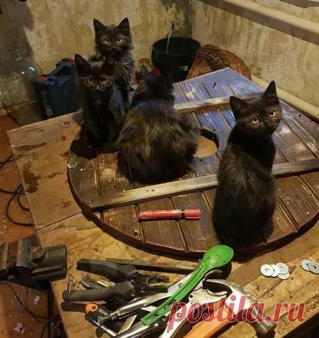 Черные коты приносят удачу и защищают от воров   Журнал Ярмарки Мастеров