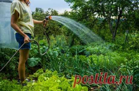 10 дел, которые ПРОСТО НЕОБХОДИМО сделать в июле на огороде | 6 соток