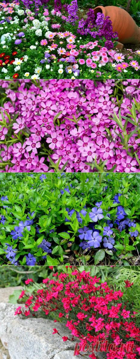 Pochvopokrovny flowers perennials, photo and names