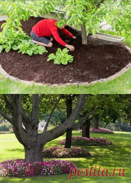 Какие цветы и растения можно посадить под деревьями: моя подборка