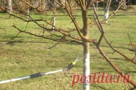 Опрыскивание яблонь после цветения - Женский журнал LadySpecial.ru