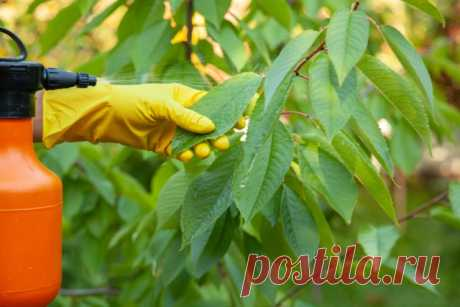 Весенняя подкормка плодовых деревьев и ягодных кустарников | Уход за садом (Огород.ru)