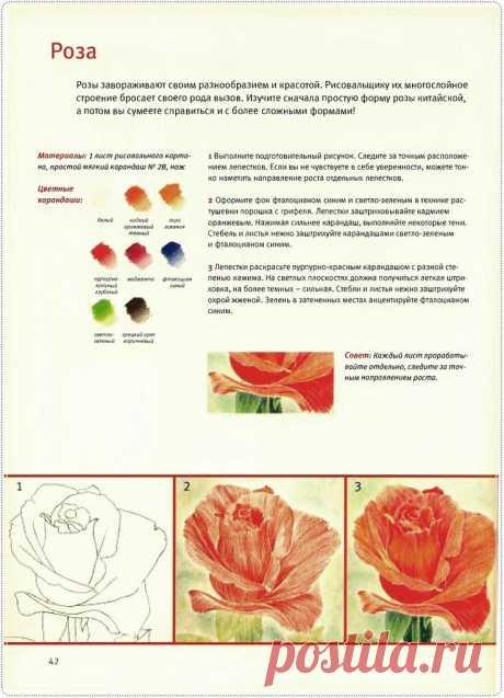 """Книга """"Основы рисования. Цветы и бутоны"""". ."""