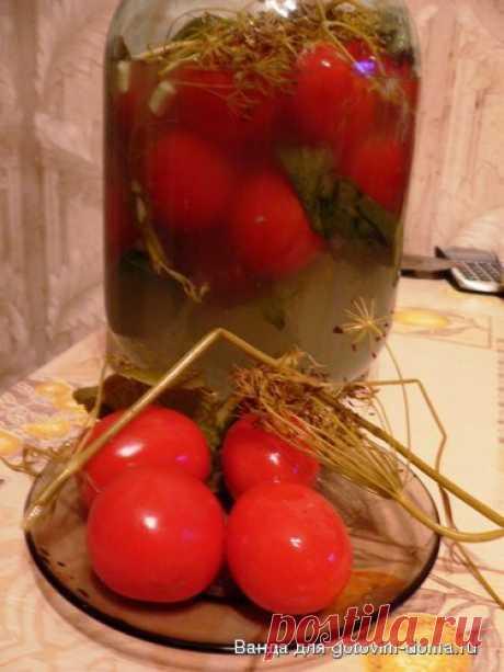 Засолка помидоров холодным способом • Помидоры, болгарский перец