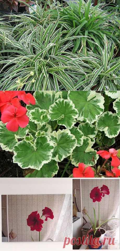 Самые полезные комнатные растения | САД НА ПОДОКОННИКЕ