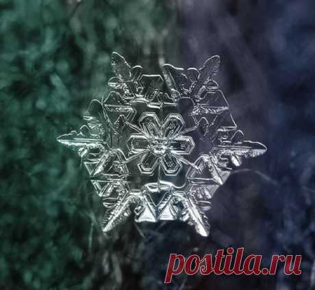 Faultless beauty of snowflakes