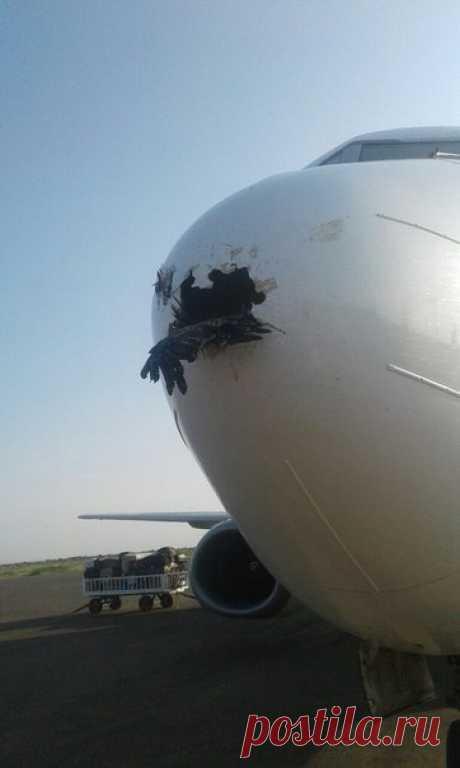 За самолет не переживайте (хоть выглядит все это и жутко), а вот птичке определенно не повезло.