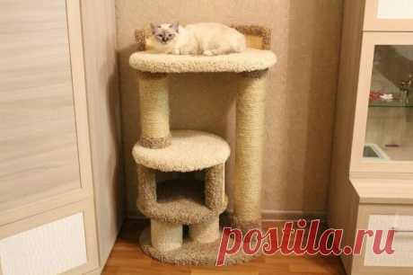 6 действенных способов отучить кота от вредной привычки точить когти о мебель
