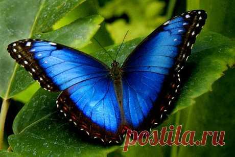 Этот чудесный мир бабочек — Чудеса