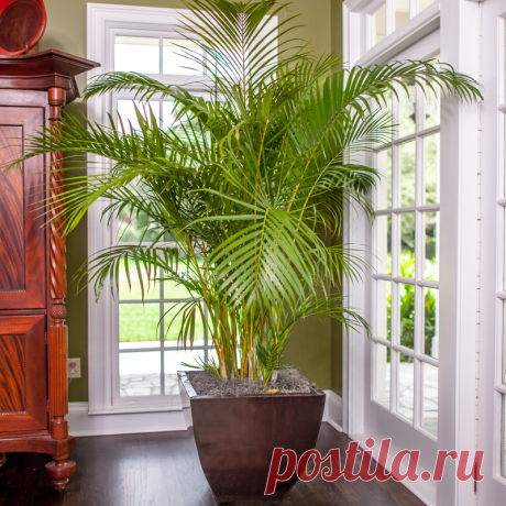 Растения, которые помогут лучше спать Растения, которые помогут лучше спатьПальма (Areca)Это растение очищает воздух от токсинов и углекислого газа. А также выделяет в воздух влагу, что делает ее особенно полезной в отопительный период, когда воздух в помещении особенно сухой.Алоэ (Vera)Это растение, кроме своих лечебных...