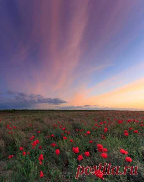 «Маковый закат». Около Алматы, Казахстан. Автор фото — Дмитрий Илышев: nat-geo.ru/photo/user/985/
