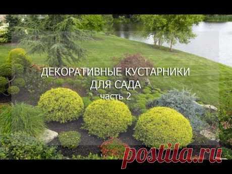 """Вебинар """"Декоративные кустарники. Часть 2"""""""