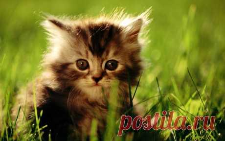 Новые фотографии котята.