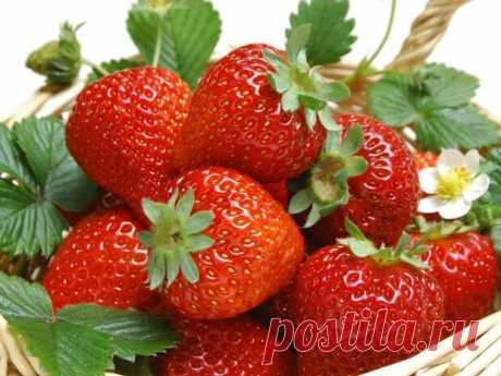 Не выбрасывайте хвостики от клубники!  Все знают, что ягоды клубники — драгоценны! Полезно лакомиться свежими ягодами для профилактики сердечно-сосудистых заболеваний: этот чудо-продукт снижает количество холестерина в крови. Свежий клубн…