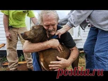 「犬感動の再会」3, 5年ぶりに飼い主に会えた犬が大号泣・せつない鳴き声に涙