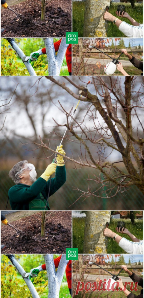 Обработка сада осенью – эффективные приемы против болезней и вредителей | Уход за садом (Огород.ru)