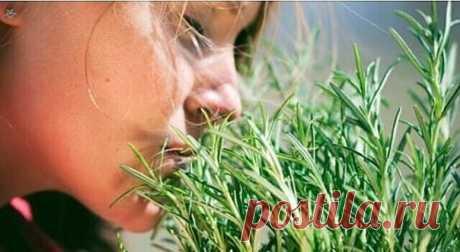 Самая мощная трава для мозгового кровообращения  Люди много столетий лечат артрит, подагру, астму, экзему, заболевания печени, желчного пузыря, сердца… Оно помогает восстановить организм после тяжелых болезней! Вы чувствовали, что ваш ум и тело устали? Знайте, что есть мощная и ароматная трава, способная обеспечить необходимую энергию. Он хорошо растёт в теплом климате и широко используется в качестве приправы. Люди много столетий лечат проблемы со здоровьем используя целе...