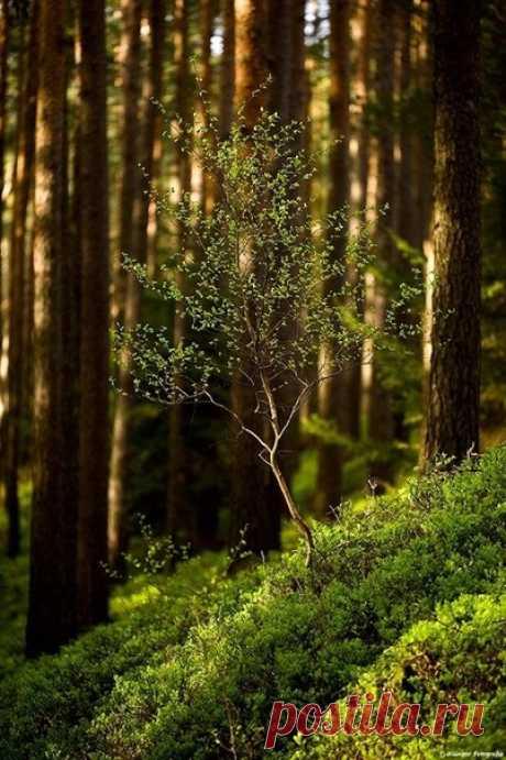 Мне не хватает тишины, Той тишины, что сердце просит, В мир красоты меня уносит, Без суеты, без суеты.