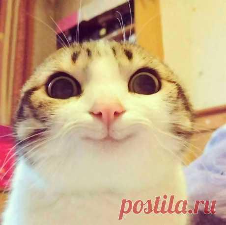Кошки: они не перестают нас изумлять)